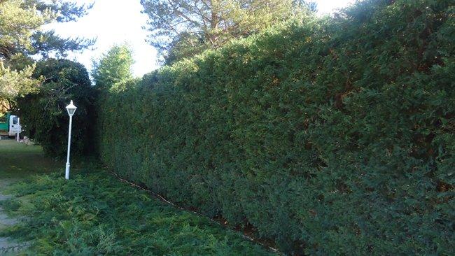 Mantenimiento de jardines, cortado de setos